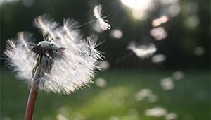Tények és tévhitek a szezonális allergiáról