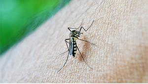Viszketõ kérdések, avagy mit kell tudni a szúnyogcsípésekrõl?